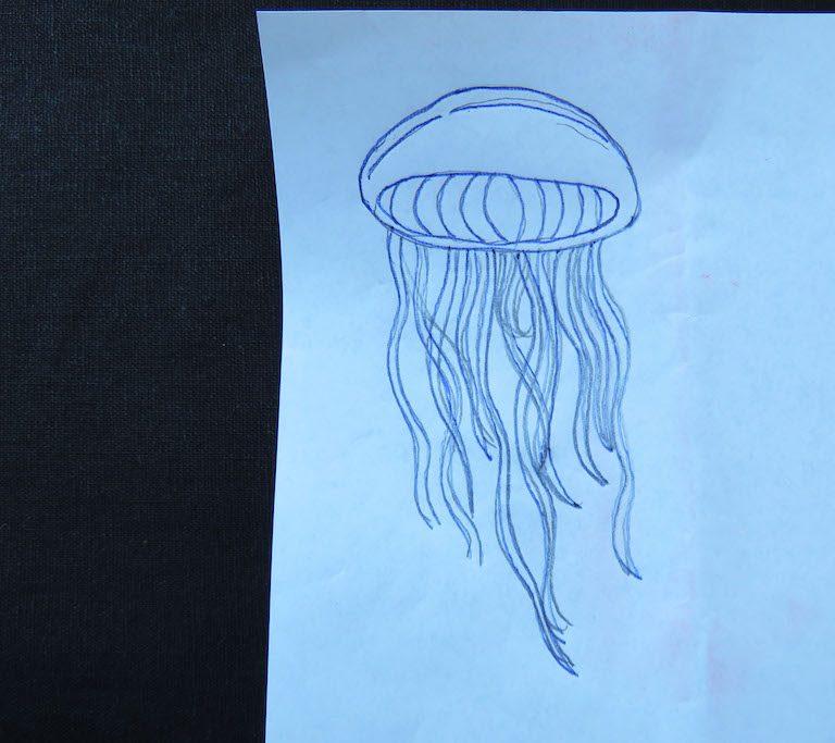 jellyfish tracing