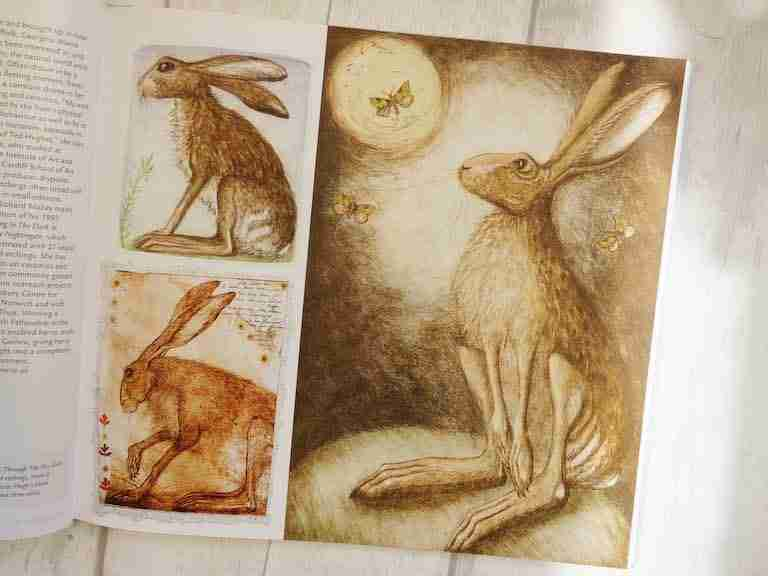 hare picture